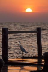 Sunset (magomu) Tags: lago lake victoria rusinga africa kenia kenya sigma150600contemporary atardecer sunset