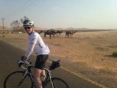 Camels and cyclist on Al Saad Road (Patrissimo2016) Tags: roadbike camels cycling