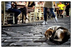 Chania Old Town at Night (a1n9d7y4) Tags: dog wideangle nightshoot streetphotography fujixseries crete chania fuji16mmf14rwr fujixpro1