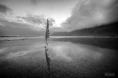 Simplicity (Hazel Rodrguez) Tags: beach nikon lanzarote byn black white mirror sea ocean d5100 sigma sky clouds landscape feather