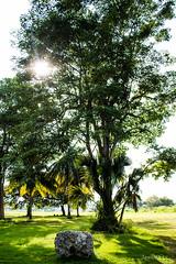 Verde-Vida (jesuscortez2) Tags: mexico p paraso naturaleza