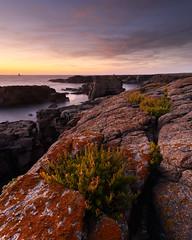 Coucher de soleil aux Chancrelles #2 ~ le d'Yeu [ Vende ~ France ] (emvri85) Tags: iledyeu vende mer sea seascape d800e zeiss leefilters sunset bluehour heurebleue coucherdesoleil longexposure poselongue