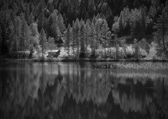 hut at the lake (vd1966) Tags: spiegelung reflection baum bume trees htte hut see lake linien lines schilf symmetrie