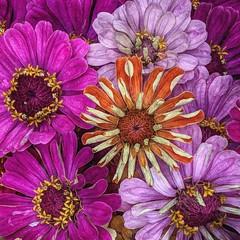 September colors (Karen-Keating) Tags: fall fadingflowers flowers purple