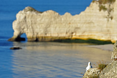 appartamento con vista (ceszij) Tags: france francia normandie normandia etretat scogliere falesie acantilado gabbiano seagull oceanoatlantico atlanticocean rock