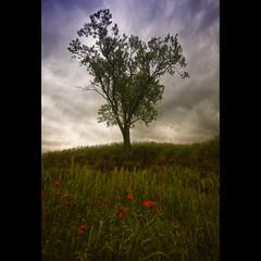 Primavera al febrer (christian&alicia) Tags: tree landscape spring nikon sigma catalonia catalunya camps 18200 paisatge catalogne d90 christianalicia