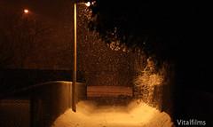 Snowy Path (Vital Films1) Tags: trees winter light snow toronto ontario canada cold wet night dark snowflakes cool nightshot sweet badass scarborough roads flakes