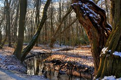 Bach im Bentheimer Wald (Sunstonecruiser) Tags: wood schnee trees winter light sun snow abstract color art nature sunshine forest outdoors deutschland licht landscapes countryside oak eiken bomen europe view sneeuw wiese dramatic natuur surreal hills agriculture sunlit oaks landschaft wald cloudysky weiland landschap badbentheim luchten eiche kleur wheatfield bentheim bossen spazieren broekland febrary struiken deutscherwald heuvellandschap northwesteurope waldlandschaft landscapedreams obergrafschaft europeanlandscape marchen deutschelandschaft grafschaftbadbentheim brookwiesen