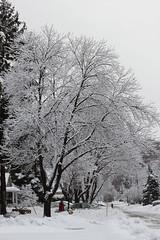 Winter's Bone (Natalie Ast) Tags: blue winter fashion by fur beige furry sheep earring wrap jewelry blogger ear marc vest jacobs satchel mongolian topshop groovee nowistyle