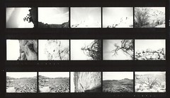 Joshua Tree (Area Bridges) Tags: california park blackandwhite film paper print desert pentax joshuatree scan scanned contactsheet 1990 mesuper joshuatreenationalpark proofsheet orwo