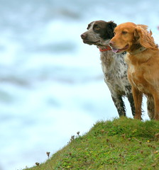 The Watchdogs (SteveJM2009) Tags: uk sea dog dogs portland coast seaside october focus dof wind bokeh pair coastal dorset breeze staring 2012 portlandbill stevemaskell