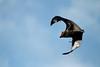 Flying foxes (crafty1tutu (Ann)) Tags: animal bat flyingfox park parramattapark crafty1tutu canon100400mmlens gettycontributor anncameron perfectbeauty top20nature top25naturesbeauty specanimal