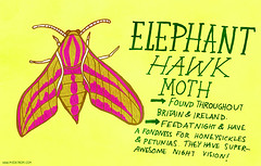079: Elephant Hawk Moth (My Zoetrope) Tags: elephant animals project day drawing hawk moth days 365 sketches zoetrope