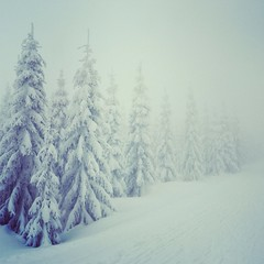 [silence] (CShorticus) Tags: trees winter white snow nature fog landscape outdoors erzgebirge zinnwald oremountains uploaded:by=flickrmobile flickriosapp:filter=nofilter