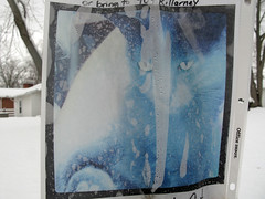 The Blue Kat (mereshadow) Tags: blue kat il killarney greenville lostcat