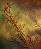 ... still looking for spring ... (xandram) Tags: robin photoshop branch manipulation tatot texturesmyown