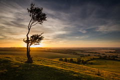 Bring Me Sunshine (Baggers 2013) Tags: uk sunset england sun tree silhouette clouds warm europe glow dusk warmth calm windswept ethereal glowing backlit dramaticsky lonetree latesummer hiils itscoldoutside chalkhills unusualtree chalkdownland leefilters englandsgreenandpleasantland flickrchallengegroup flickrchallengewinner somethingwarming coldestmarchfor50years