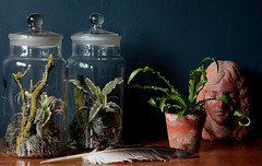 Vintage jars with kokedama (Ken Marten) Tags: plants fern vintage moss collections terrarium kenmarten hermeticalondon