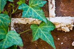 (Genevievery) Tags: brown building green nature leaves vines bricks ivy climbing mortar