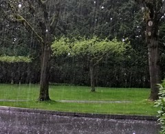 sry13d05 Green Trees in Rain, Surrey BC (CanadaGood) Tags: canada color colour tree green rain afternoon bc britishcolumbia surrey 2013 canadagood thisdecade