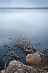 Fallen (Kristin Sig) Tags: lake tree blues fallen apavatn