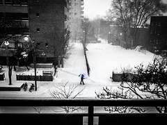 Alone in the Storm (FRAENA) Tags: street snow toronto ontario canada umbrella alone village walk snowstorm freezing windy lonely churchwellesley