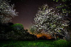 Almonds in the Dark (Michael Bolognesi) Tags: trees light sky lightpainting primavera night painting islands spring long exposure skies flor almond canarias estrellas tenerife nocturna flowering canary starry almendros santiagodelteide teidemike