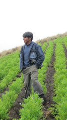 """Potato seed plants and their custodian at flowering time, Bolivia, Feb 2012 • <a style=""""font-size:0.8em;"""" href=""""http://www.flickr.com/photos/94121135@N04/8683692816/"""" target=""""_blank"""">View on Flickr</a>"""