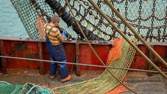 Fisherman at work... (AJFpicturestore) Tags: work boat fisherman cornwall fuji shackles nets newlyn xpro1 alanfoster