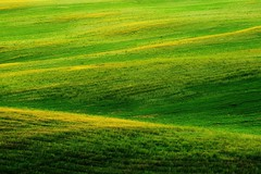 Green daze (Pavel Cervenka Photographer) Tags: land landscape field green grass moravia czech republic abstract awesome minimal minimalism beautiful colorful catchy nice wonderful wow lovely nature light waves hill pavel cervenka canon 6d detail ef70200f4l serene grassland