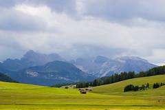 IMG_1528 (Lorenzo Pauselli) Tags: altoadige sdtirol vacanze castelrotto 2016 estate dolomiti montagna streghe valli rocce funghi fungo portraits ritratto primopiano scattirubati