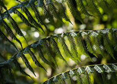 (hmxhm) Tags: aotearoa nature newzealand wellington zealandia