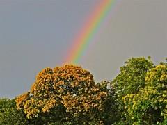 Gold Tree (Deepgreen2009) Tags: golden tree foliage rainblow myth weather sky refraction storm cloud