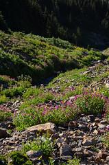 DSC_8932 (sammckoy.com) Tags: garibaldipark castletowers scrambling mountaineering hiking summer mountgaribaldi sphinxbay blacktusk helmcreek gentianridge