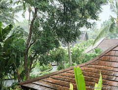 A Little Rain Never Hurts (Laurie2123) Tags: bophutresort kohsamui laurieturner laurieturnerphotography laurie2123 thailand