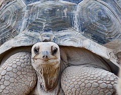 Smile! (S2TDD) Tags: shell valencia loceanografic giant turtle