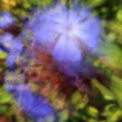 09-14-Jane (Jane Poate) Tags: 366project blurred iphoneography slowshutterapp flowers