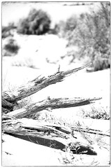 Killer sun (bumbazzo) Tags: spagna espana tarifa sun sole natura morta bn bbianco nero bw black white landscape landscapes paesaggio paesaggi