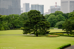 Imperial Gardens (rod_b_k) Tags: ifttt 500px travel japan tokyo garden contrast holiday