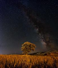 Infinity (acipinarli) Tags: milkyway astro panoramic astrophotography nightsky galaxy lonelytree alone tree grass stars