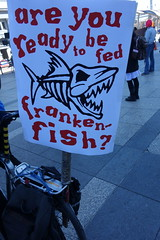 Rally to oppose FDA approval of GMO salmon (Steve Rhodes) Tags: salmon atlantic patents geneticengineering righttoknow protestaction fooddemocracy gmofreesalmon noqueirotransgenicos sansogmorganicgmofreeworld agresearchmadness leaveourstaplefoodsalone uploaded:by=flickrmobile flickriosapp:filter=nofilter