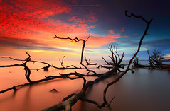 Skeleton of Dead Trees (Fakrul J) Tags: ocean life longexposure trees sunset sky cloud seascape beach nature clouds canon landscape dead skeleton photography landscapes frozen amazing raw skies seascapes view dusk no shoreline scenic mangrove shore freeze fallen malaysia stick dreamy guardian fallentree selangor guardians deadtrees beautifulsunset banting morib singleshot nohuman kelanang eos500d pantaikelanang singhrayfilter leefitlers darylbensonreversegrad fakruljamil wwwfakruljamilcom imagewithcolors leeproglass3stop
