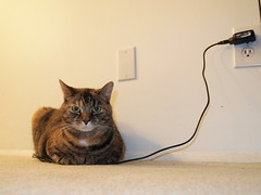 Charging the Cat (Raccoon Photo) Tags: pet cats playing silly animal cat pose model feline funny nap technology lol stripes tabby tiger humor kitty posing cutie sleepy what aww napping haha tortie lmao huh diva sillycat charge charger funnycat rofl facialexpression cattitude electrocat torbie technocat catrobot seriousface catmodel lolcat technologycat fullycharged lolcats electriccat catmeme thatcat cellulardevice catcharger pokecat roboticcat internetcat pikacat catelectro becausecats chargingthecat catfacialexpression pikachucat catcharged catcord catenergycharger chargingcatmeme catcharge pokemoncat chargedcat chargethecat howtochargeyourcat chargingcat howtotellifyourkittyischarged plugincat