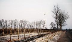 um 09:30 Uhr (Gerhard1946) Tags: buxtehude windkraftrder vormittags apfelplantage