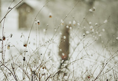 who? (Vernesa Catic-Metzner) Tags: winter snow nikon soft dof bokeh tones twigs d7000
