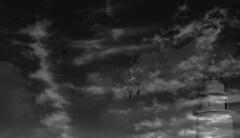Mediterraneo (Bapagri) Tags: byn mediterraneo gaviota avion
