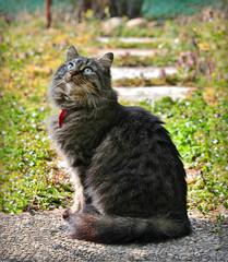 Waiting for spring ... (Viola's visions) Tags: cats pets animals felini felines gatti catsinthegarden bestofcats be