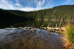 ertovo Jezero (Katka S.) Tags: park lake reflection water forest republic czech deep unesco national trunk bohemian reservation umava jezero qutumn ern