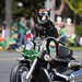 The coolest dog you will see today