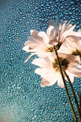 Rain dance (SolsticeSol) Tags: beautifulflowerpictures beautifulflowerimages